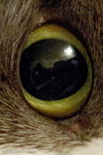 Cat's eye with noise, shot by Michael Willems at 3200 using a Canon 7D