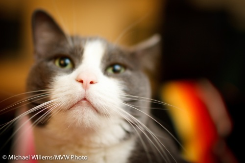 Cat, by Michael Willems (35mm, f/1.4)